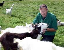 Ingvar Troøyen med noen av geitene i besetningen.