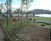 Planting i Drammen Elvepark. Foto: Arne Enger