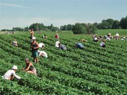Mange utenlandske arbeidere jobber for lite penger. (illustrasjonsfoto:Roland Schgaguler/Scanpix)