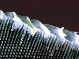 Elektronmikroskopbilde av sommerfuglvinge.