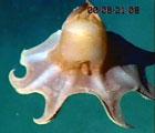 Dette blekksprutlignende dyret var ett av mange undervannskameraene fanget inn.
