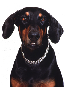 Det kan være mange årsaker til at hunder biter, men de fleste skyldes misforståelser mellom hund og menneske. (Foto: SCANPIX)