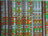DNA er arvestoffet vårt, og DNA-profilen er ulik for kvart enkelt levande vesen. Arkivfoto)