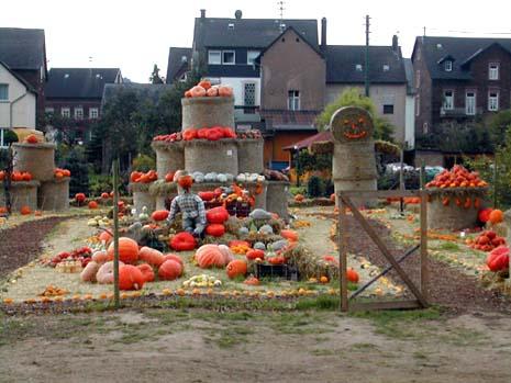 En bonde i Moseldalen i Tyskland har stilt ut gresskarene sine.