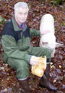 Sverre Røsvik og grisepurka er gode venner