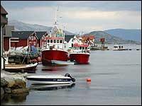 Det vert eit imponerande syn når 500 båtar legg til kai i Kalvåg. (Foto: Arild Nybø, NRK)