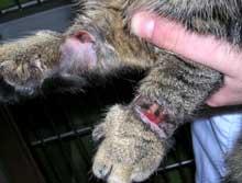 En 14 år gamel gutt har innrømmet å utført ugjerningene på katten som måtte avlives