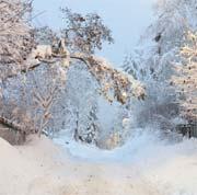 Vi drømmer om hvit jul, men drømmen går sjelden i oppfyllelse. Foto: Knut Fjeldstad / SCANPIX