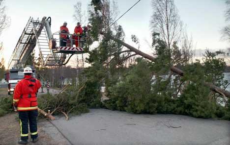 Store trær måtte ryddes bort etter å ha blåst over veien runt Forshaga i Värmland i Sverige lørdag. Foto: Helena Karlsson / NWT / SCANPIX SVERIGE
