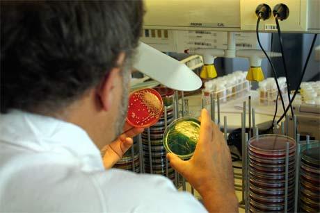 Fra mikrobiologisk avdeling ved Sentralsykehuset i Rogaland høsten 2002. Prøvene fra blokken i Bergen er sendt hit for analyse. Foto: Alf Ove Hansen / SCANPIX
