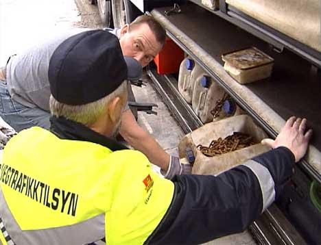 Det er mange lastebiler som ikke har med kjettinger når de skal inn i Norge.