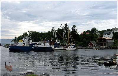 Sauesund. (Foto: Arild Nybø)