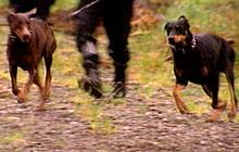 Kvinnens hunder skal ha skapt frykt. (Illustrasjonsfoto).
