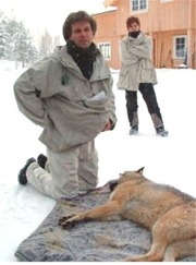 - Hvert år, de siste fem årene, er det født 10 ulvekull langs grensen, og vi kjenner til hvem de stammer fra og hvor de holder til, sier Petter Wabakken.