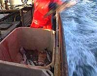 Fisk kastes fra et islandsk fartøy. Foto: NRK
