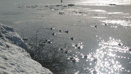 Det strålende været har fått fuglene til å starte sine vårlige sprell. Foto: NRK