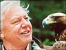 David Attenborough. Foto: BBC
