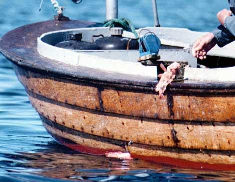 Vær forsiktig hva du fisker i Bohuslän. Ill. foto: Gorm Kallestad / SCANPIX