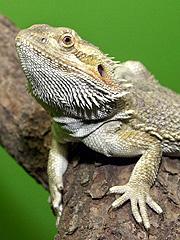 Etter 1995 har Direktoratet for naturforvaltning (DN) vært nødt til å avlive inntil 1000 eksotiske dyr på ett år. Foto: Oslo Reptilpark / SCANPIX