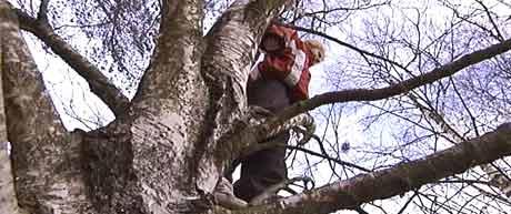 Ennå er det mulig for allergikere å klatre i trærne, men snart braker det løs...