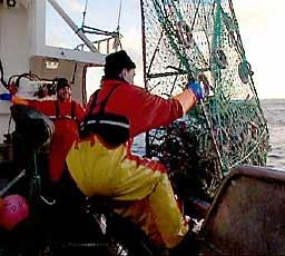 Krabbefiskerne – blant dem Odd Bjarne Esbensen i Vardø – får mindre betalt enn før. Urimelig, mener Kystfiskarlaget. (Arkivfoto: NRK)