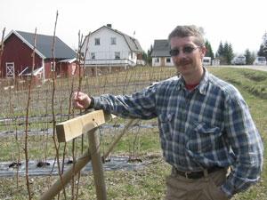 Arne Egil Retteråsen fra Åsnes dyrker bringebær.