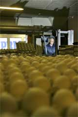 Det blir nok egg til pepperkakedeigen til jul. (Foto: SCANPIX)