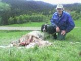 Bonde Nils Aasen har mistet flere sauer på beitet i år.