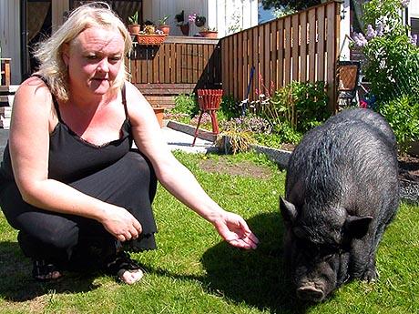 Matmor og advokat Anita Haugen møter i tingretten i dag for å få behalde minigrisen Wilma. Foto: Terje Nordkvelle.