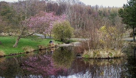 Aboretet Foto: Åge Skogen