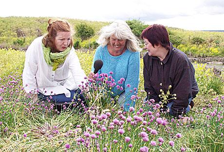 Bilde: Anne Siri Brandrud t v, Kari Bay Haugen og Inger-Lise Østmoe byr på kulinarisk ferd i Naturens verden i sommer og putter det meste i munnen. (Foto: Inger-Lise Østmoe)