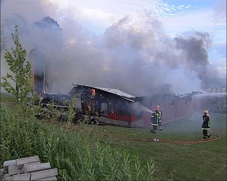1000 griser brant inne da grisehus på Nordre Hemma gård brant ned.(Foto: NRK)