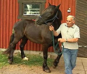 Hest og hesteeier Michael Bølla.