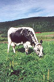 Sussi fra Vefsn landbuksskole i Mosjøen.