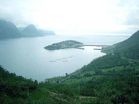 Husøy er ei flat lita øy med et fiskevær der det bor 240 mennesker tett i tett. Foto: Kjetil Lillesæter, NRK