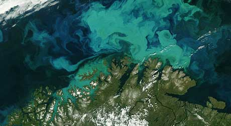 Satellittfoto av enorme mengder plankton i Barentshavet nord for fastlands-Noreg 19. juli 2003. (Foto: NASA)