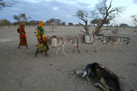 Darfur-flyktninger leter etter vann på grensa mellom Tsjad og Sudan. (Foto: K.Prinsloo, AP)