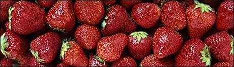 Ikke alle jordbær er like fine som disse. En telemarksbonde må brenne nærmere tre millioner jordbærplanter på grunn av smitte av svartflekk. (Arkivfoto)