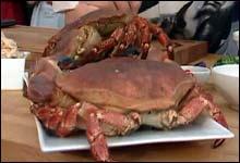 Det var ikke disse krabbene som ble belagtlagt og avlivet på Sandefjord lufthavn Torp. Men fire søskenbarn på besøk fra England.