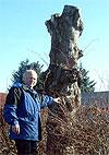 Sigve Svendsen viser et av trærne som er helt ødelagt. (Foto: Camilla Hatleskog/NRK) Red