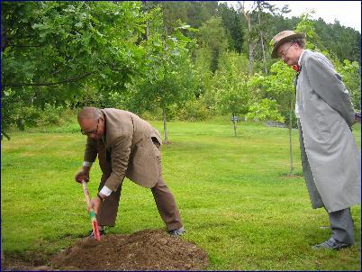 Hans Blix planter tre i fredsslunden ved Kongebjørka - et av de mange vellykka arrangementa under Bjørnsonfestivalen. Foto: Gunnar Sandvik.