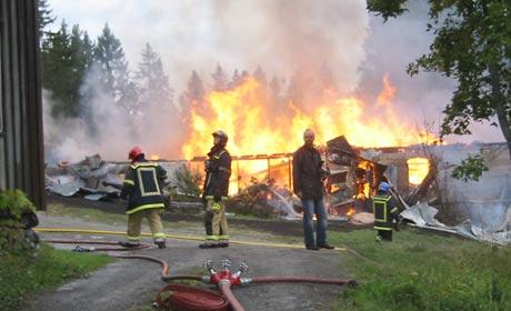 370 griser brant inne på Farbergshagen gård i Gaupen i Ringsaker. (Foto: Ola Bjørlo Strande/NRK)