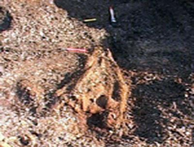 Slik så fiskeøglehodet ut da det ble funnet. Foto: NRK