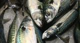 - Fisken i Oslofjorden kan bli uspiselig