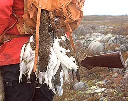 Rypejegerdrømmen... Foto: Bjørn-Owe Holmberg / SCANPIX
