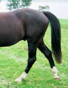 Pass deg for denne enden av ein hest! Foto: NRK