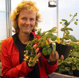 Anita Sønsteby er en av landets fremste forskere på jordbær. (Foto:Vera Wold)