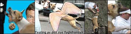 Klikk på lenken under for å se de beste hunde-bildene!