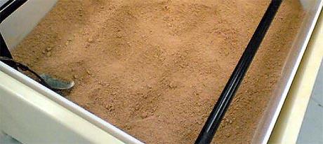 Dette brune pulveret tisettes plast for å gjøre den nedbrytbar (Foto: Per Christian Dyrø, NRK)