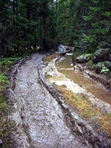 Maskinene lager dype spor i terrenget. (Foto: Vera Wold/NRK)